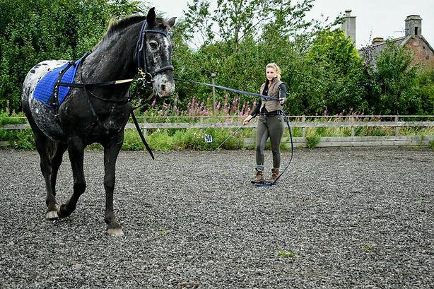 karele horse riding school