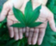 Hemp leaf & Hand.jpg