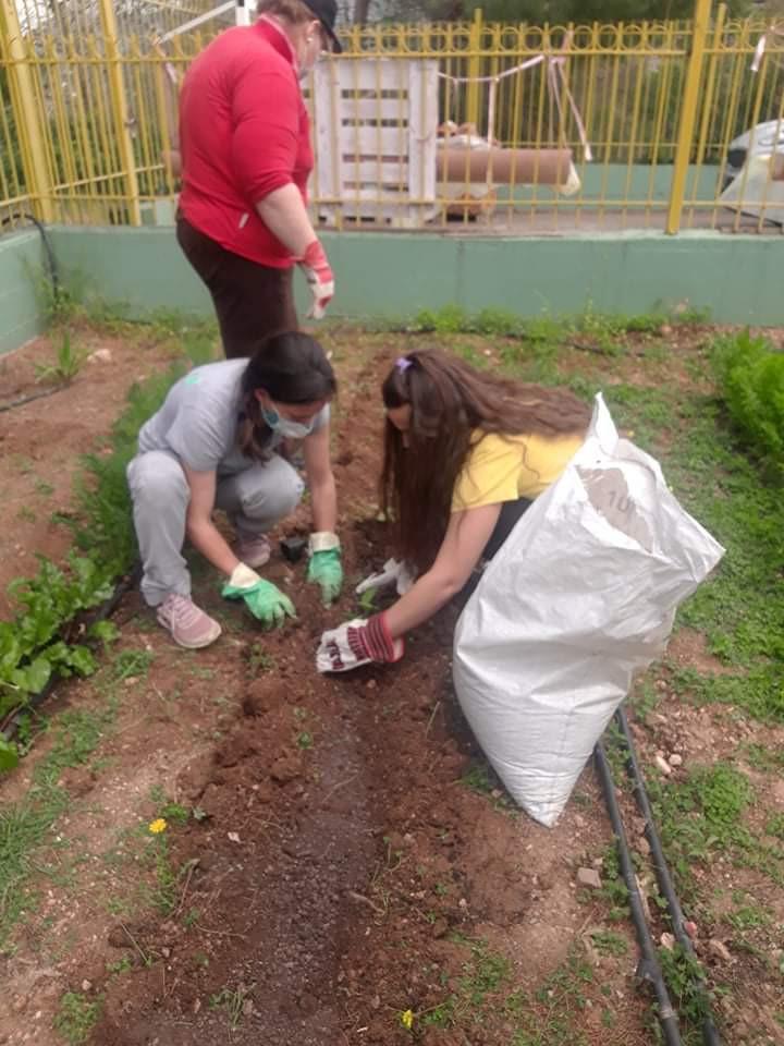 Φυτεύουμε αγγουράκια και μελιτζάνες!