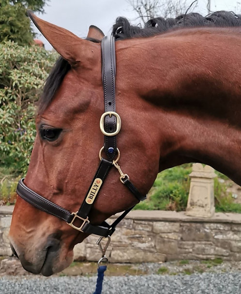 Premium Leather Headcollar with Engraved Nameplate