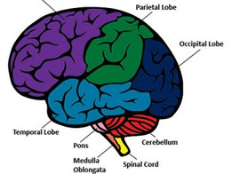Back to School: Brain Development Does Not Stop Once School Is Out For The Day