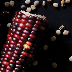 AVEDA_Ingredients_Maize 07