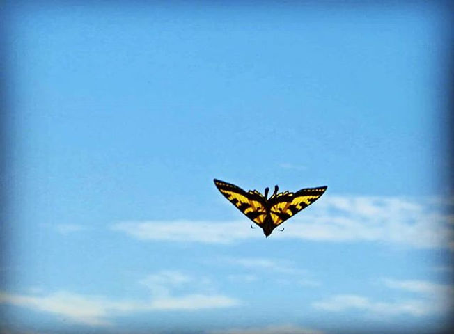 #butterfly #sweetfreedom #critters #sky