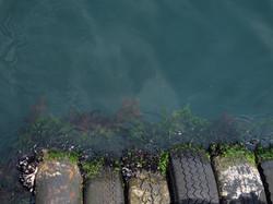 harbour-still