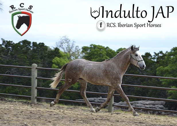 Indulto7