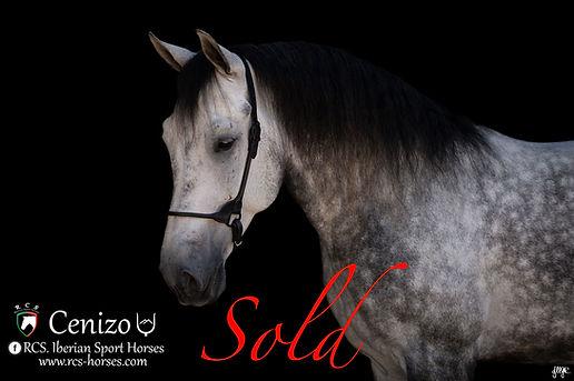 Cenizo-Sold.jpg