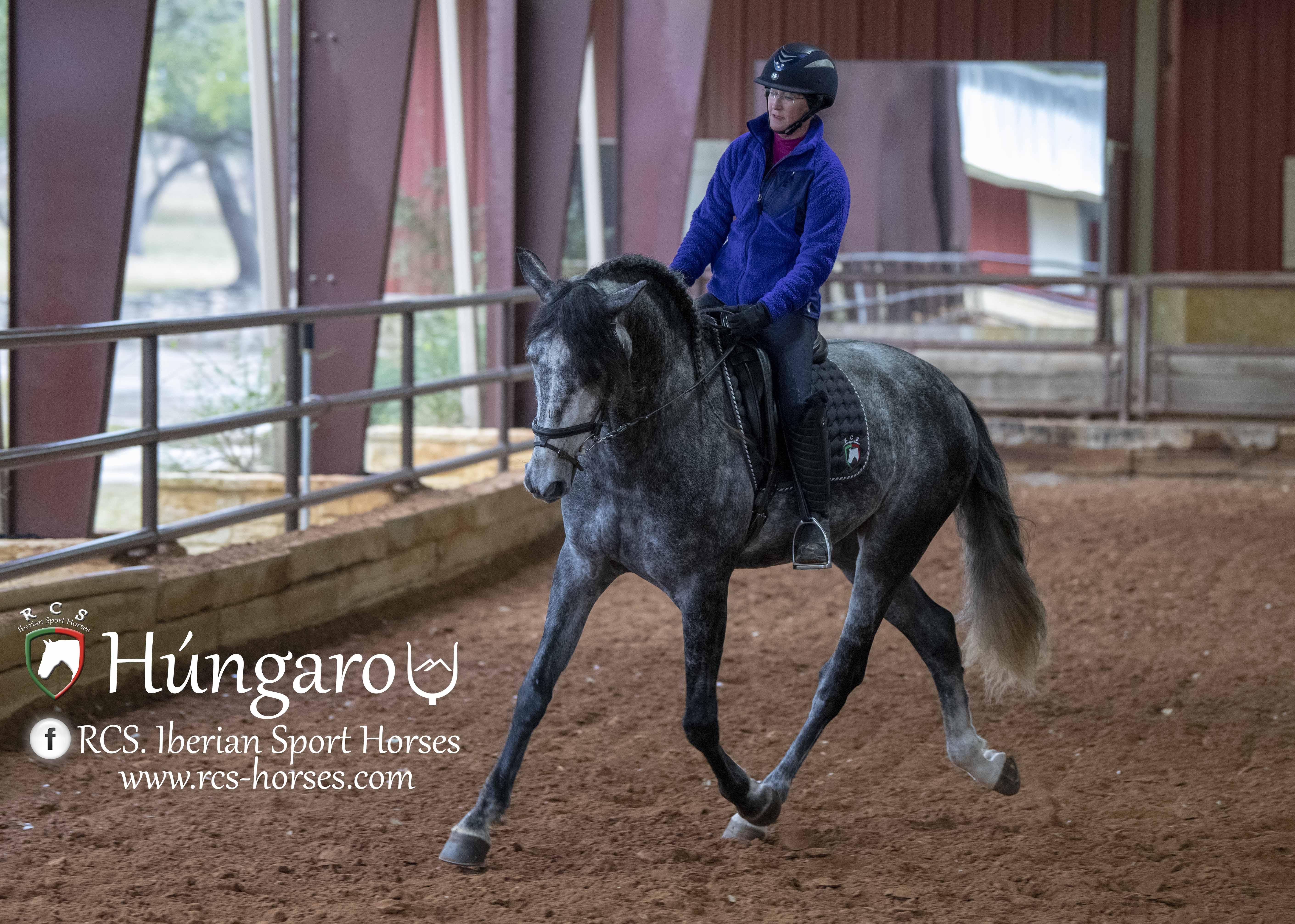 Hungaro