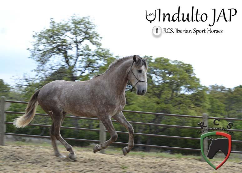 Indulto8