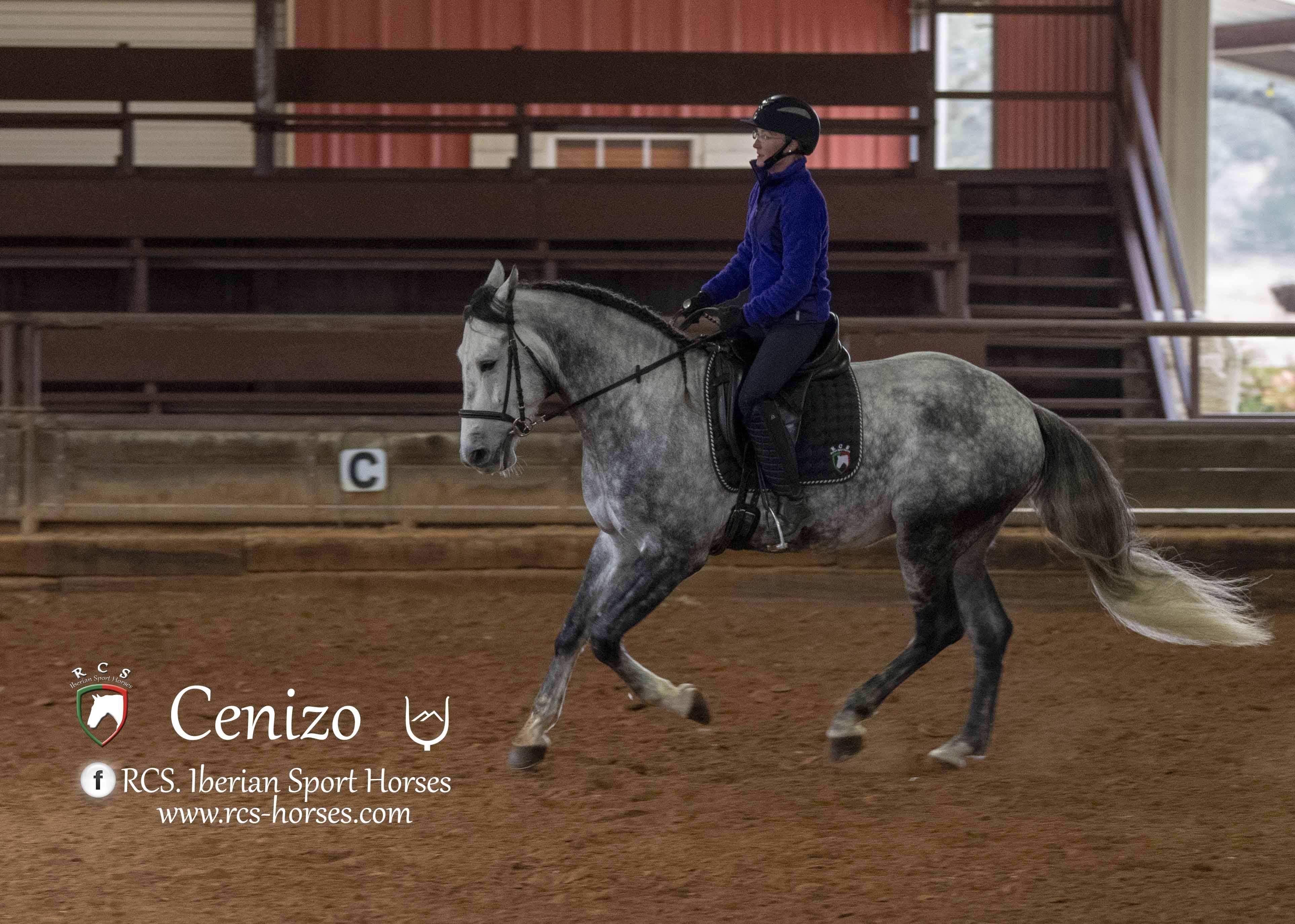 Cenizo