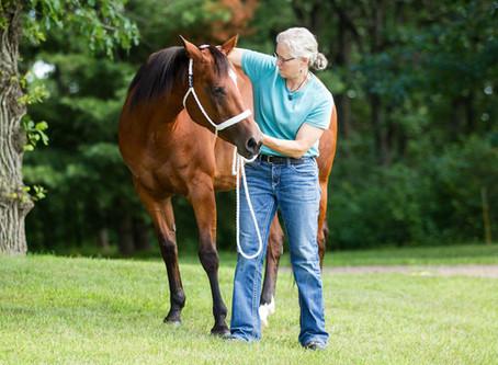 Gentle Animal Chiropractic