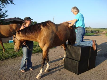 Horse Chiropractor Little Falls MN