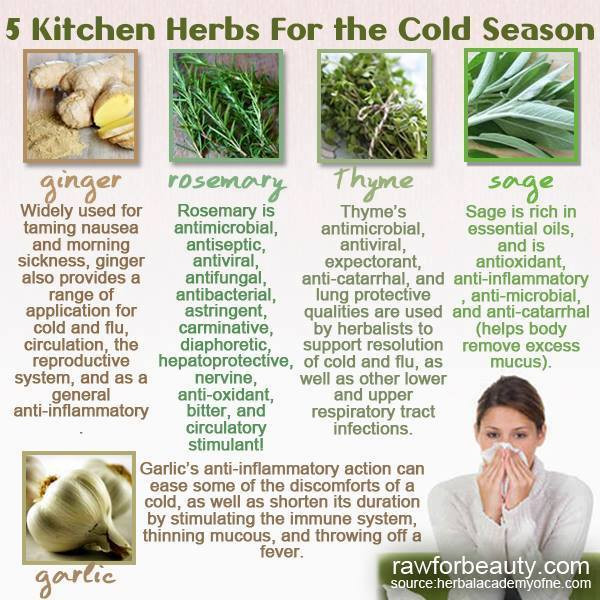 Kitchen Herbs for the Cold Season