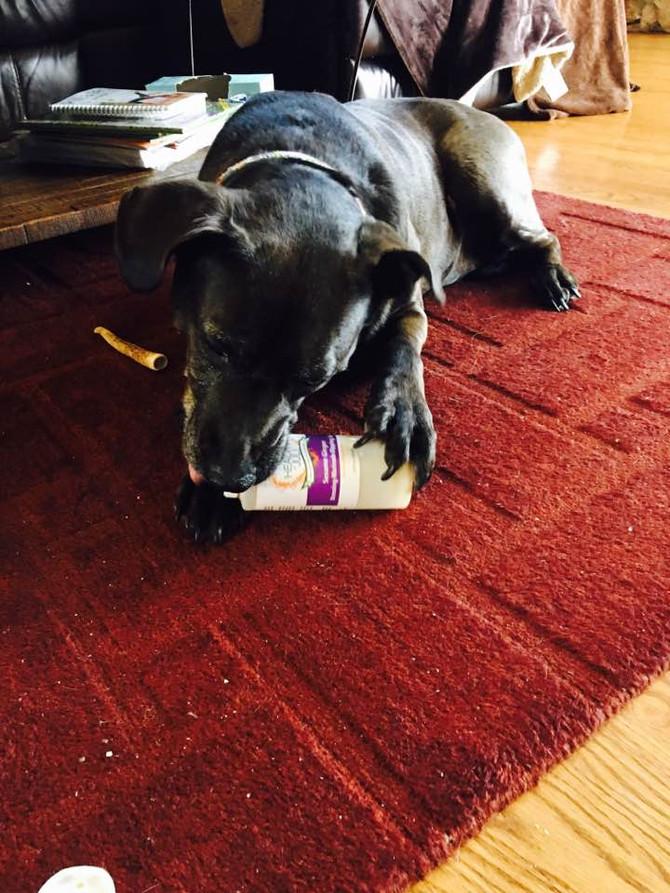 Meet My Dog Cocoa