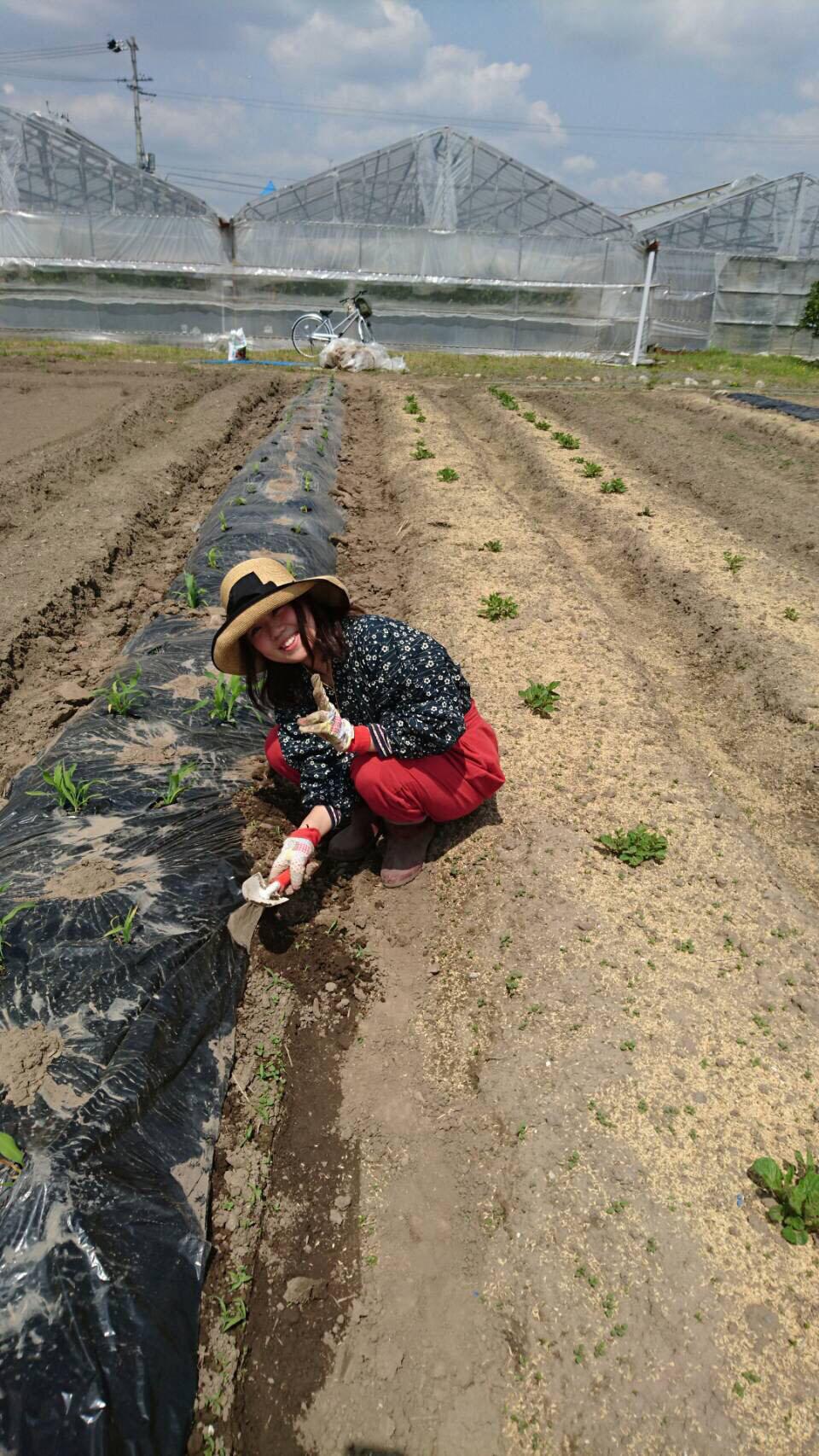 農業始めました(#^.^#)