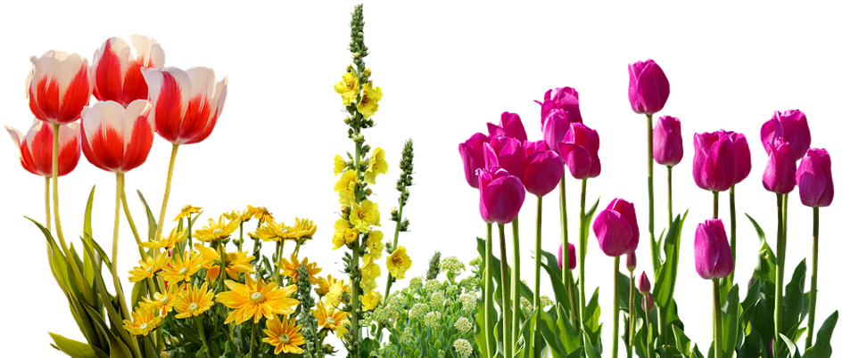 PinClipart.com_spring-tulips-clip-art_32