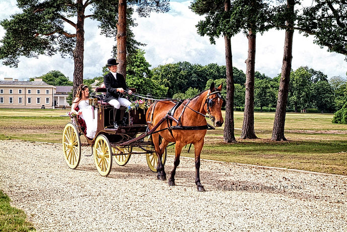 Bewly married on Horse drawn Cart