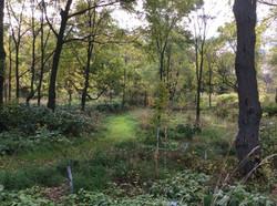 Path-through-the-Arboretum