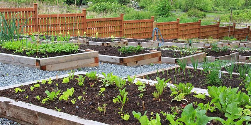 How to start a vegetable garden.jpg