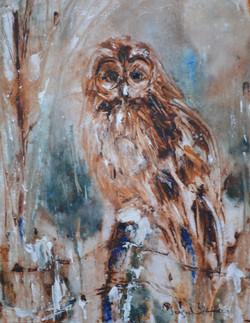 The Winter Owl II