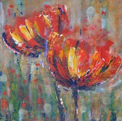 Poppies in Full Blossom