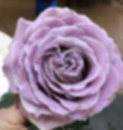 princess _kaori _garden_rose.jpg