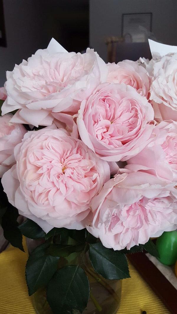 Tsumugi Wabara Garden Rose