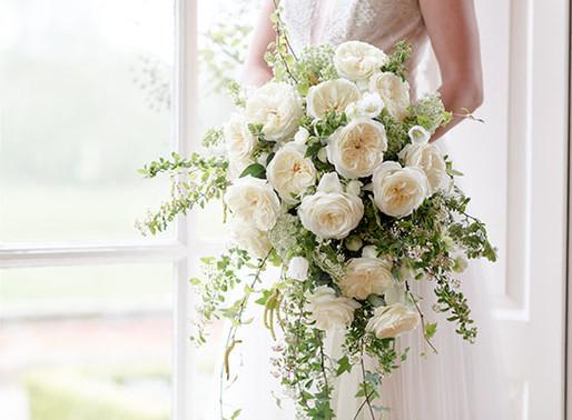 Leonora: A New Wedding Favorite