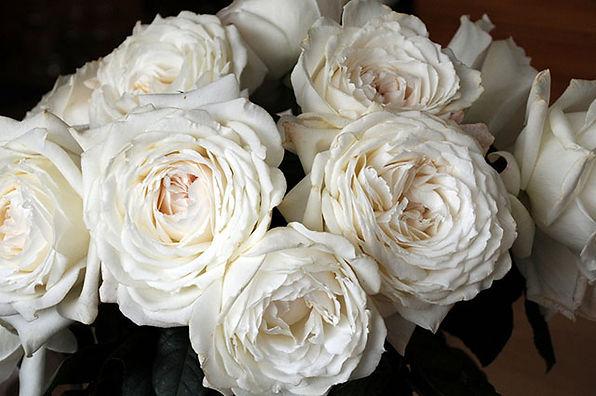 Princess Miyuki Japanese Garden Roses