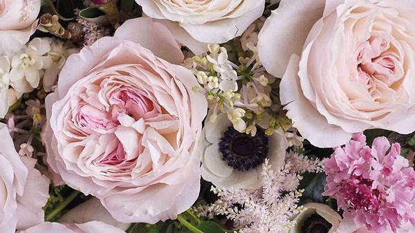 Keira English Garden Rose