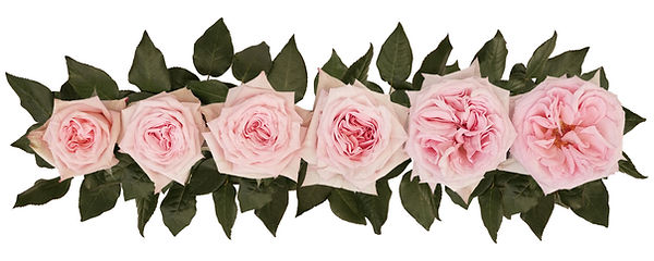 pink_o'hara_alexandra_farms_point_of_cut