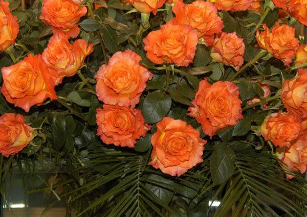 Free Spirit Garden Roses arrangement.jpg