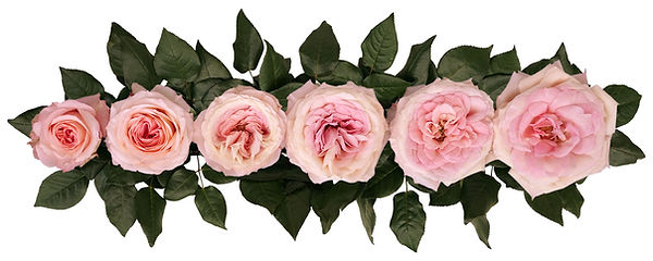 mayra's_bridal_pink_alexandra_farms_poin