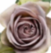 Amnesia deluxe garden rose.jpg