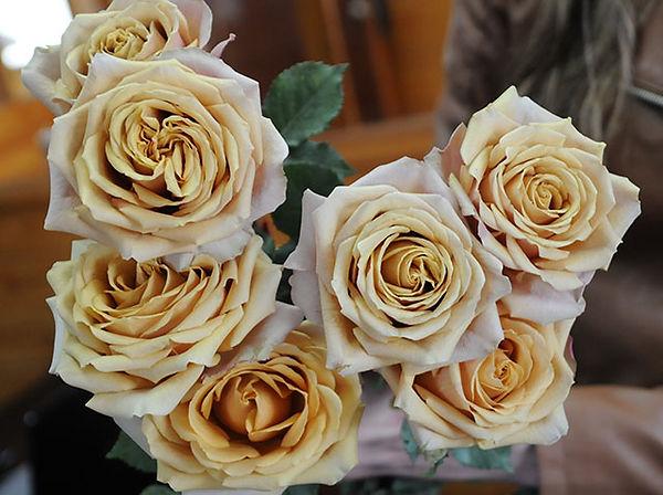 Golden Mustard Deluxe Garden Roses