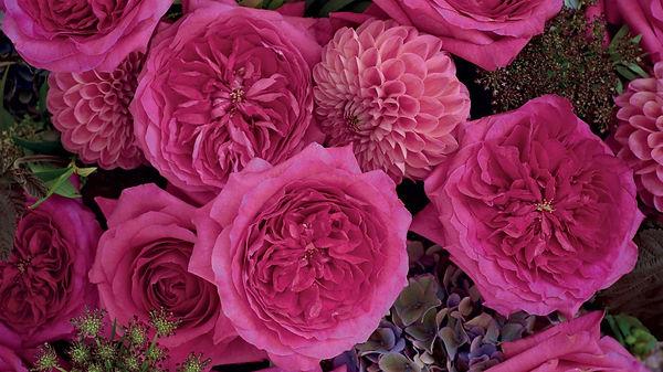 Capability English Garden Rose