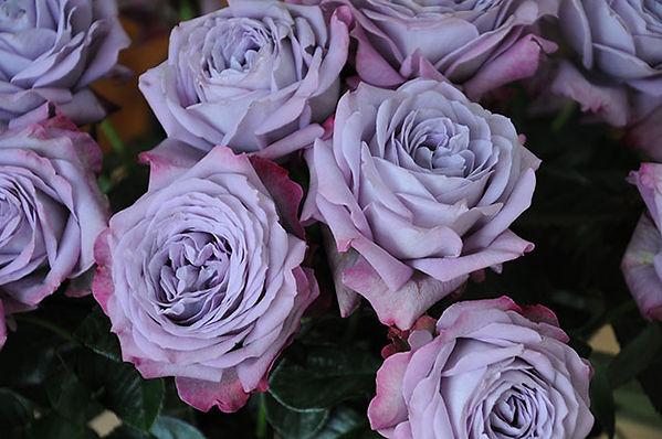 Lavender Bouquet Deluxe Garden Rose
