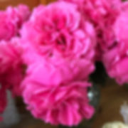 Princess Meiko Japanese Garden Roses.jpg