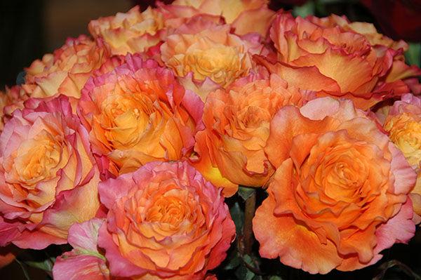 Free Spirit Garden roses arrangement 2.j
