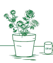Illustration of roses in hydrating solution
