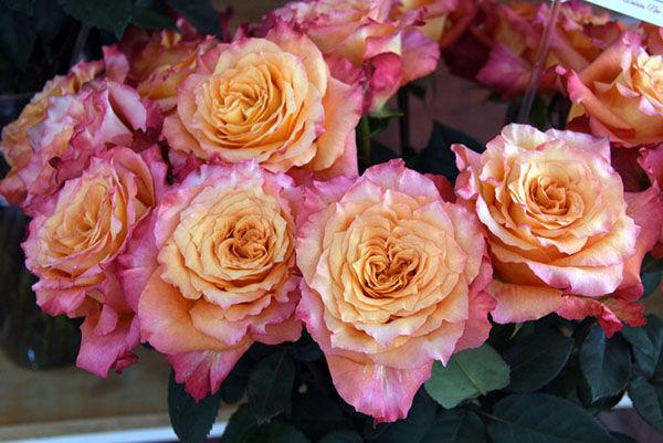 Free Spirit garden rose bouquet.jpg