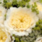 Patience English Garden Rose