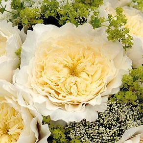 David Austin Eglish Garden Roses