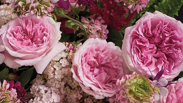 Miranda English Garden Rose