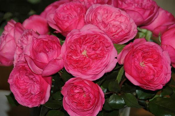 Baronesse Deluxe Garden Rose