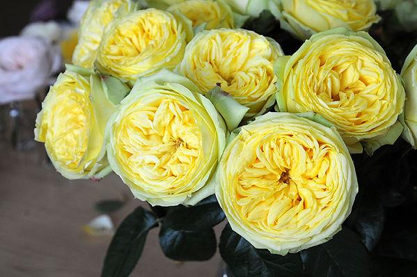 Catalina Deluxe Garden Rose arrangement