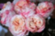Princess Sakura Japanse Garden Roses