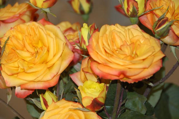 Fiction Deluxe Garden Roses