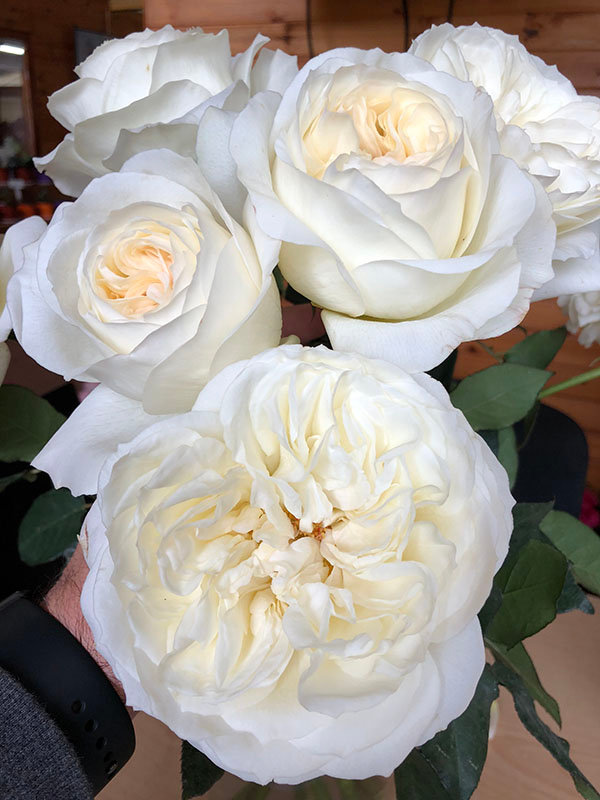 Ella Auswagsy bouquet.jpg