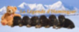 Chiots de la Légende d'Hamingjar