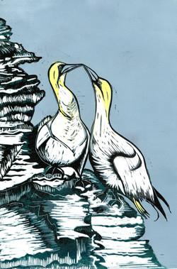 Gannets, linocut print